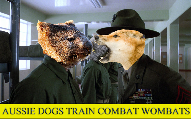 Aussie Dogs Train Combat Wombats