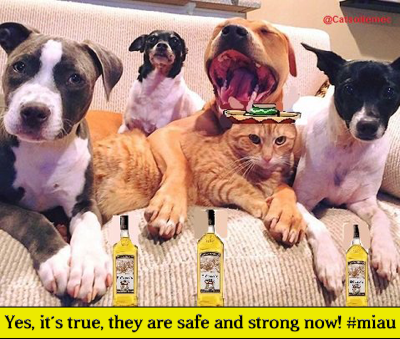 "BREAKING: PUPPY PACKS PRESERVED!  Mr. President El Catso: ""Yes, it´s true, they are safe and strong now! #miau"""